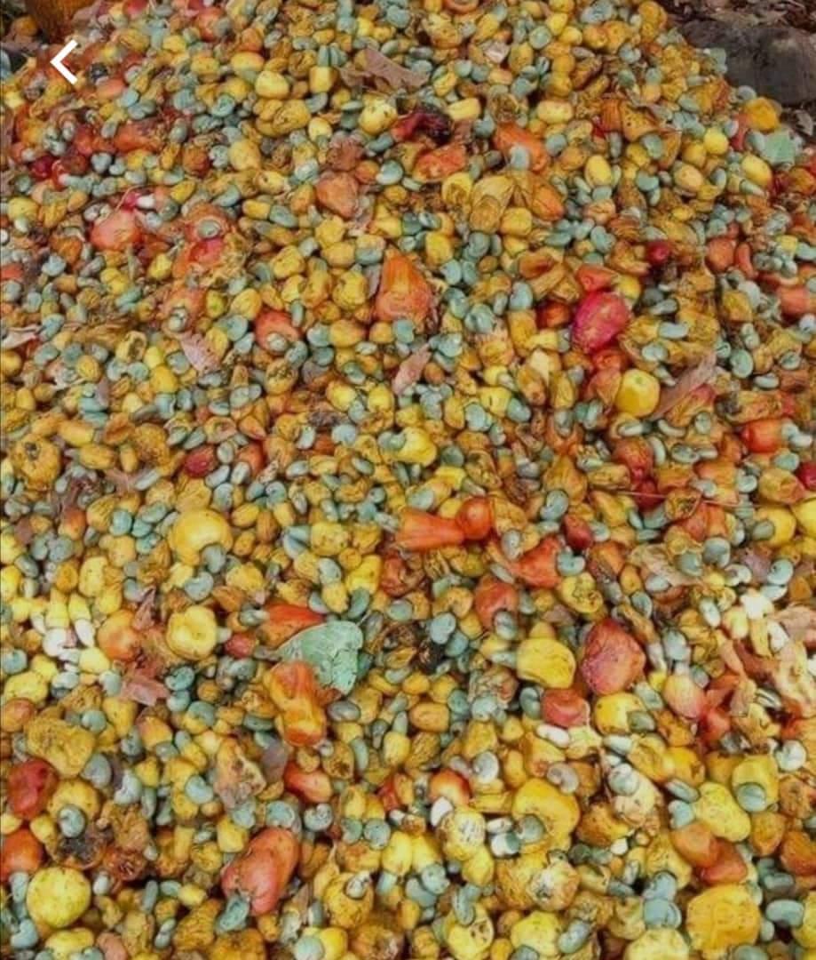 noix de cajoux décortiquées