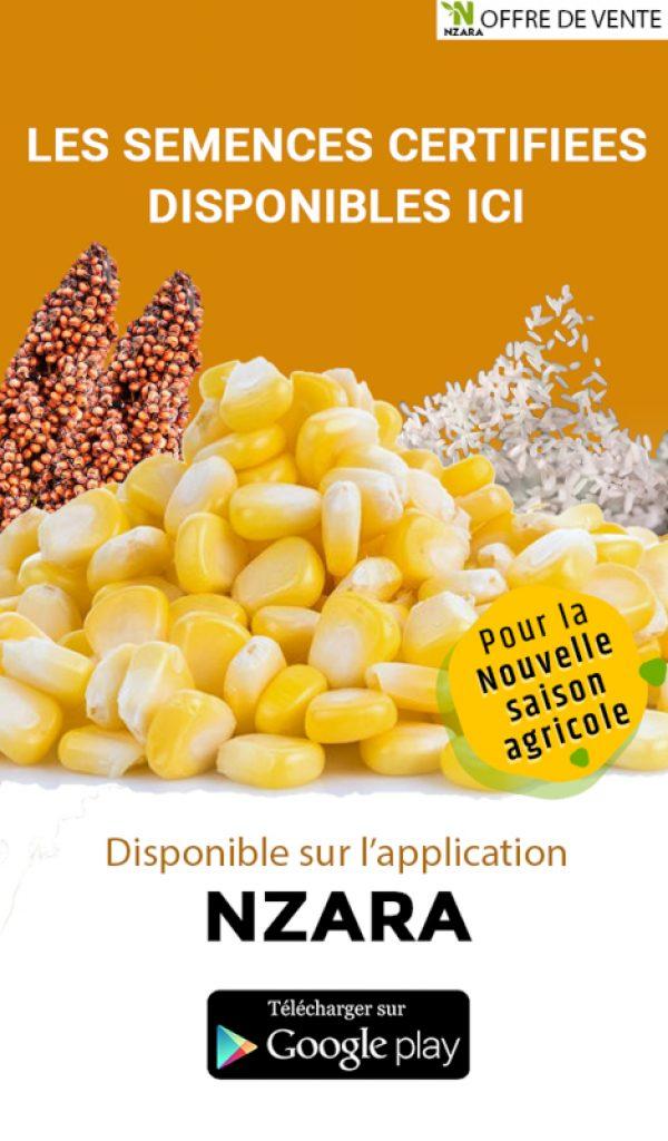 NZARA-semence-ads-web-v3-2.jpg
