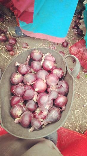 Oignons violet et ails