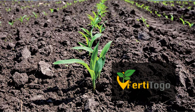 Togo: FertiTogo, une innovation majeure dans l'agriculture