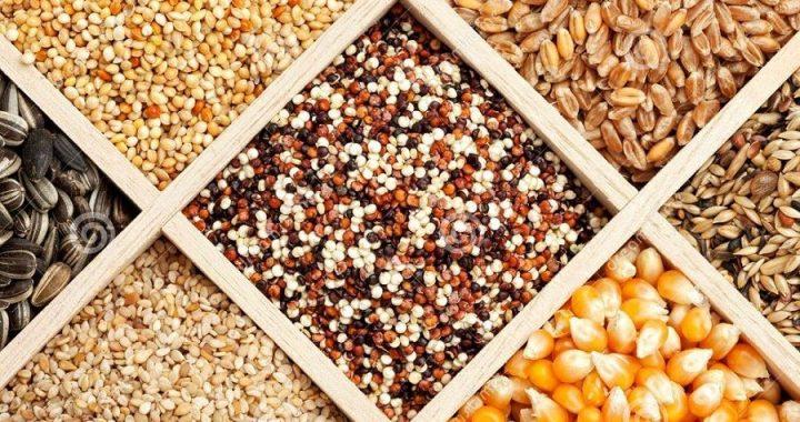 Togo: Approvisionnez-vous en semences et plants à l'ITRA