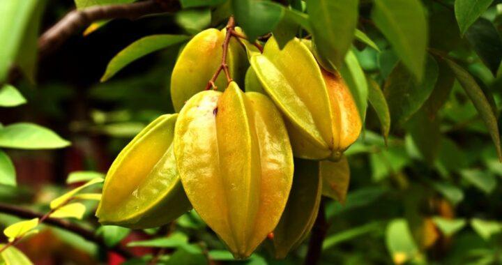 Afrique: Découvrez vite ce fruit rare !