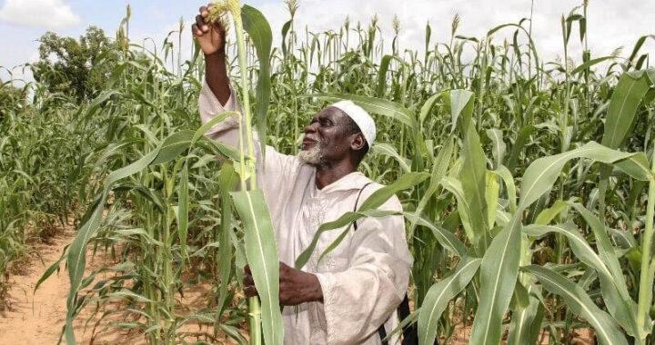 Afrique de l'ouest : l'UEMOA au chevet de l'agriculture et de l'élevage