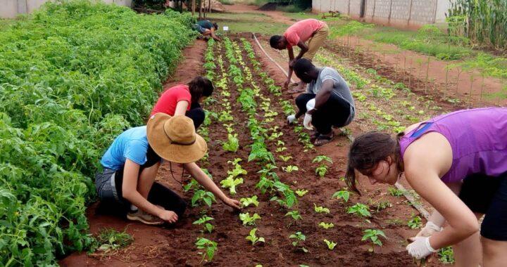 Togo : Liste des 100 jeunes retenus pour la formation en agroécologie déjà disponible!