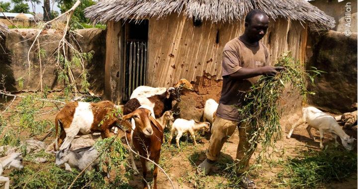 Togo: Evoluer vers un élevage moderne et durable