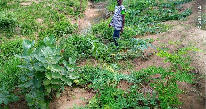 Togo: Un jardin pour soigner!