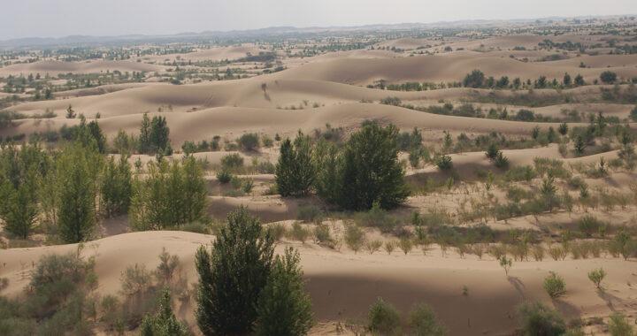 Le défi de la restauration des forêts au Togo