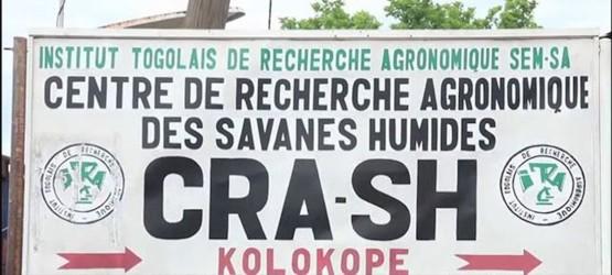 Togo : Plus de 2 000 têtes d'ovins-caprins au CRASH