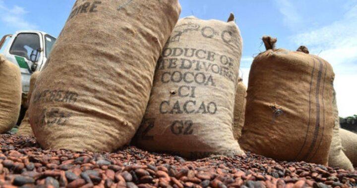 Togo: Campagne de commercialisation du café-cacao lancée!