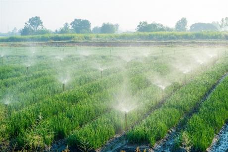 L'agriculture, plus grande consommatrice d'eau?