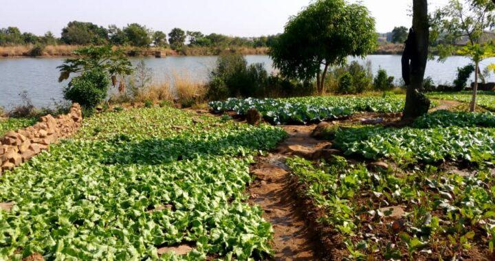 Togo : L'Harmattan pour faire pousser les légumes