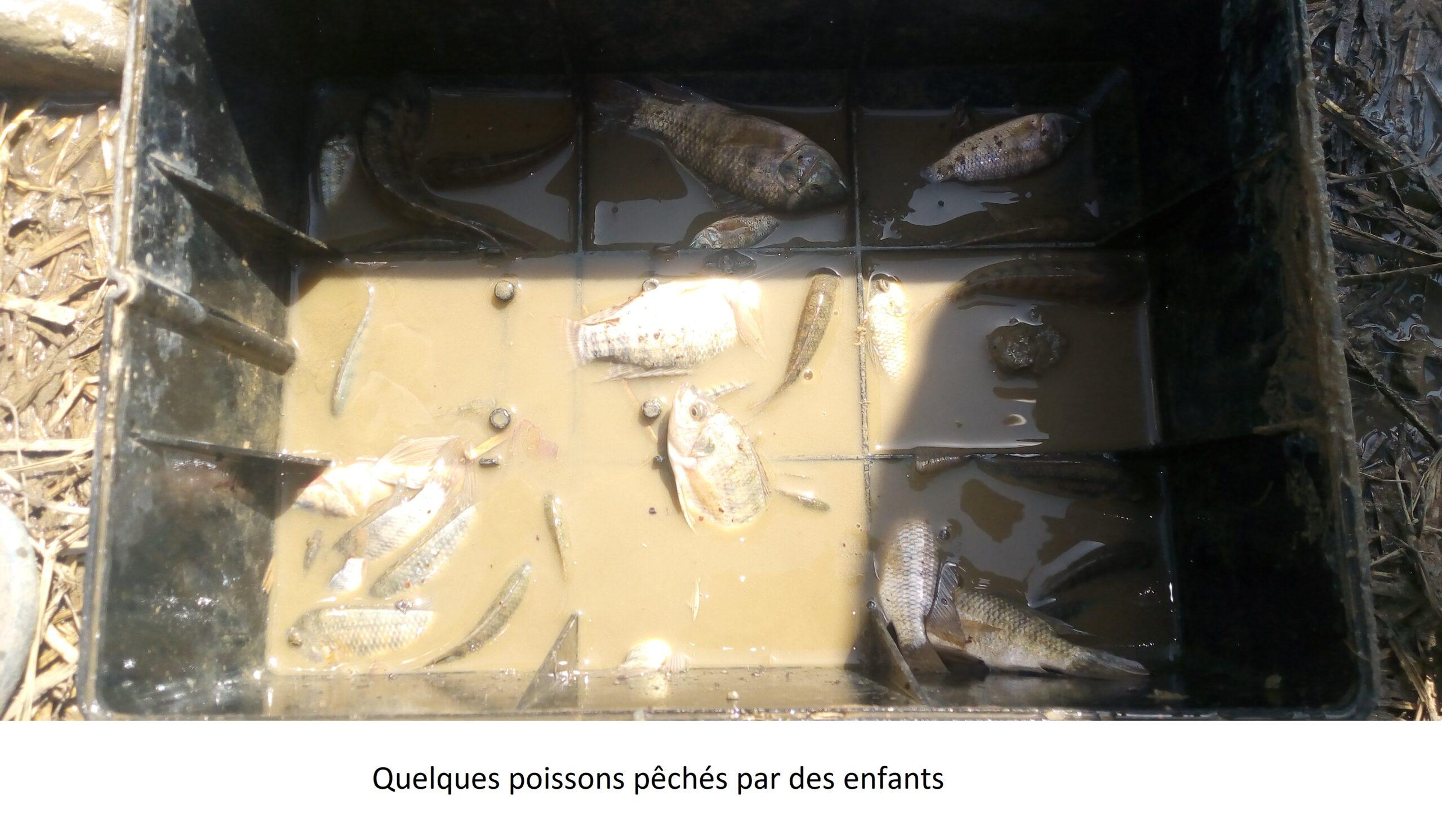 Information Nzara : poissons de retenue d'eau