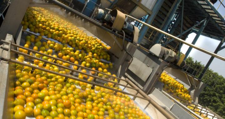 Ghana : Démarrage d'une usine de fruits
