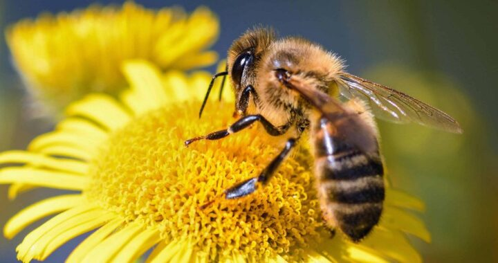 L'apiculture comme activité d'avenir pour les jeunes agriculteurs