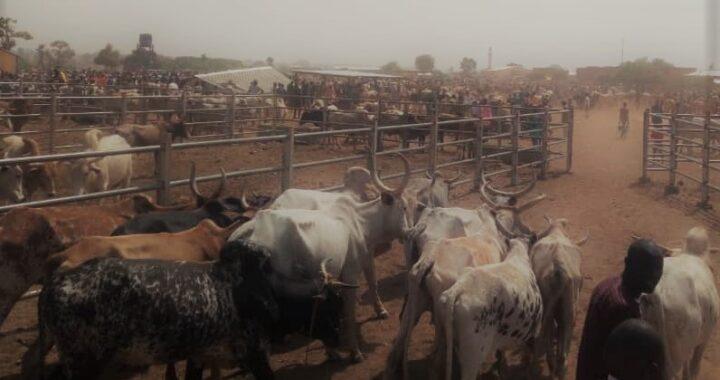 M. Abdoulaye Tonga : « Les éleveurs transhumants sont des victimes collatérales des restrictions sanitaires ».