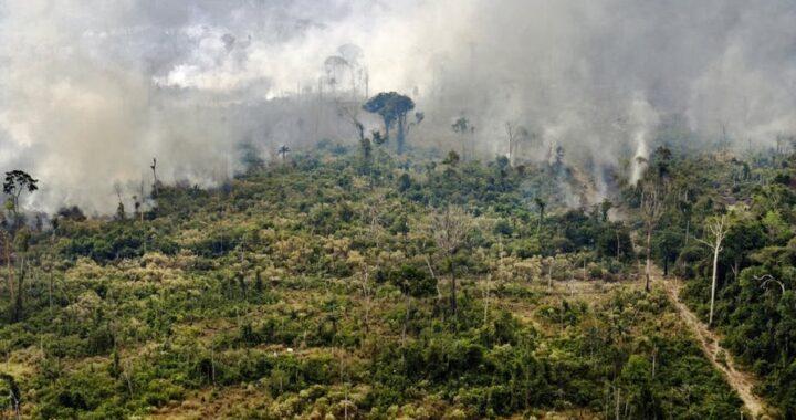 Démarrage du deuxième inventaire forestier national