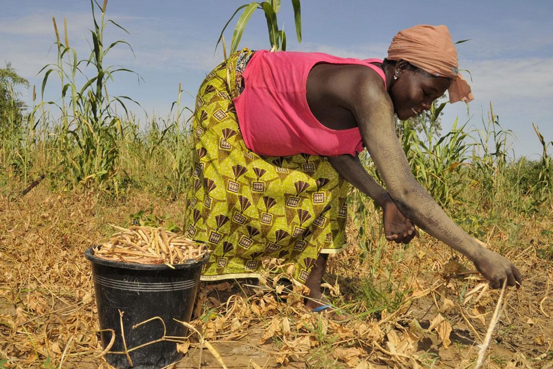 Les priorités du Fida définies au Togo