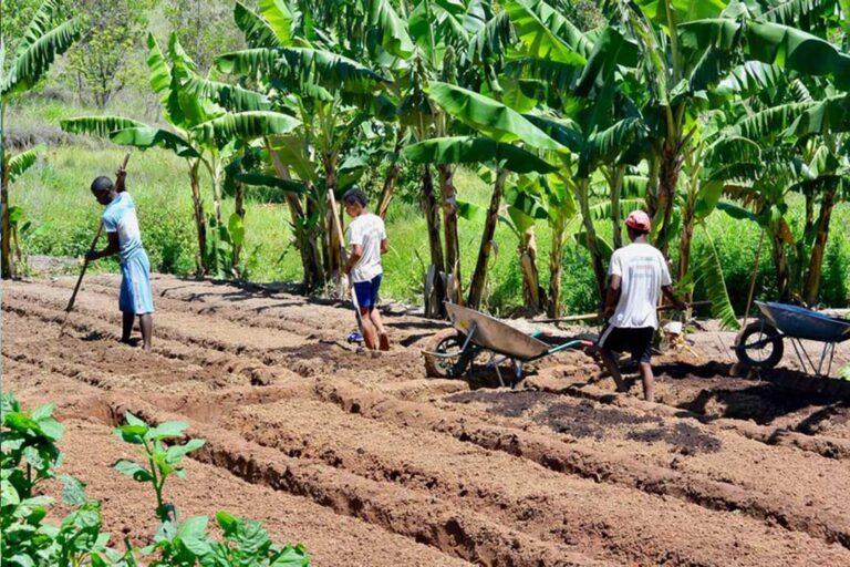 Les potentialités du secteur agricole sont moins exploitées en Afrique
